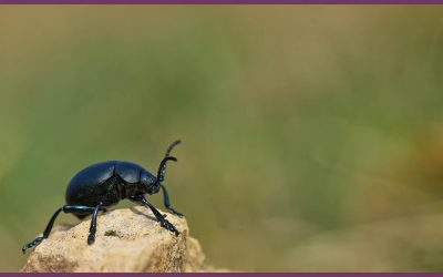 What Dung Beetles Can Teach Us About Running a Business